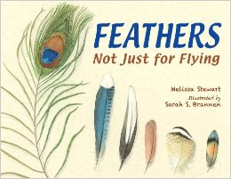 feathers not just for flying review